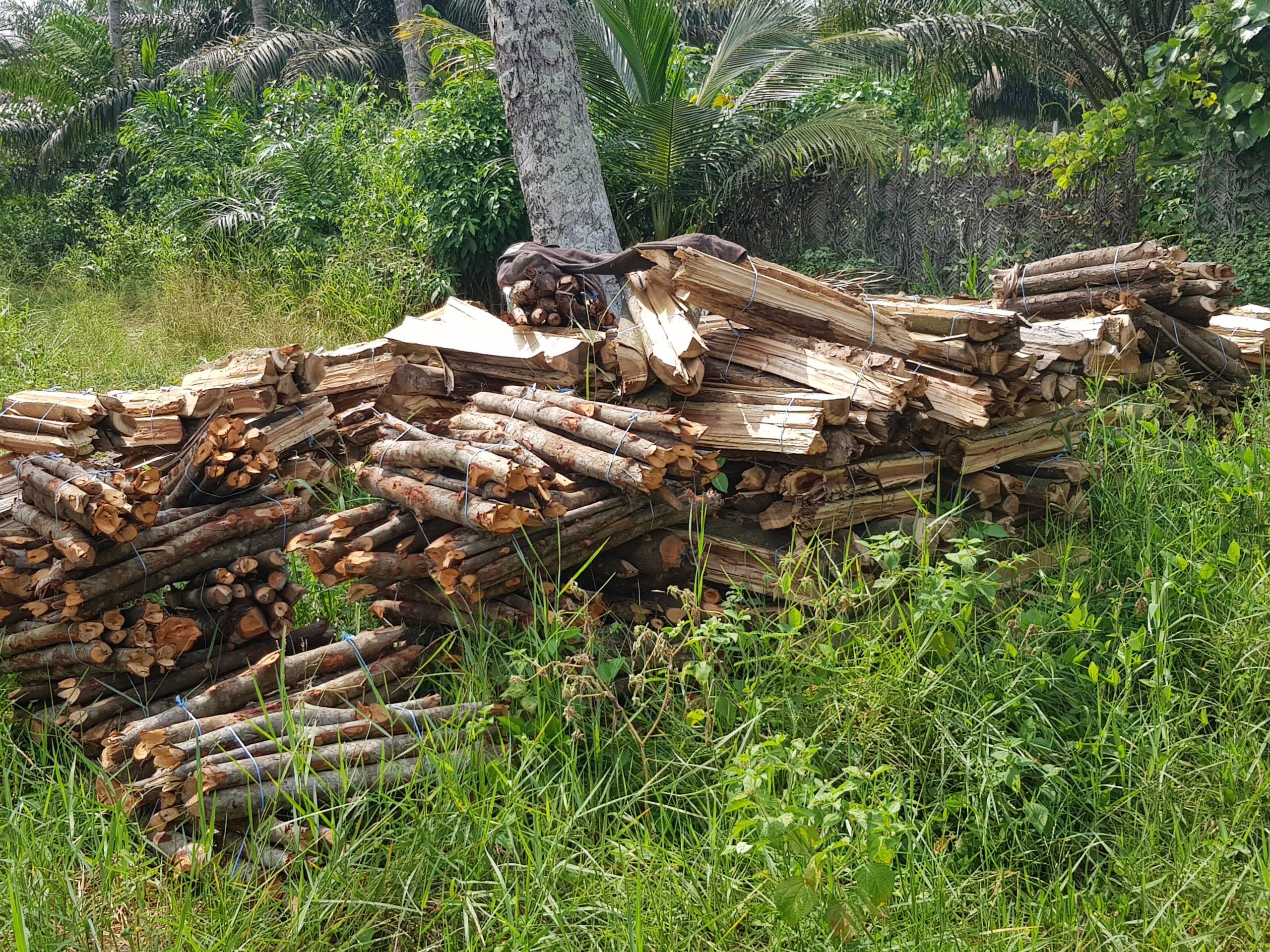 Le nouveau code Forestier Ivoirien
